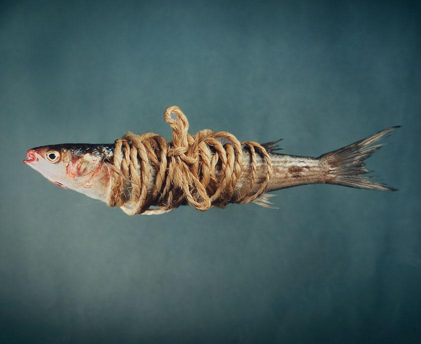 poisson ligote avec de la ficelle