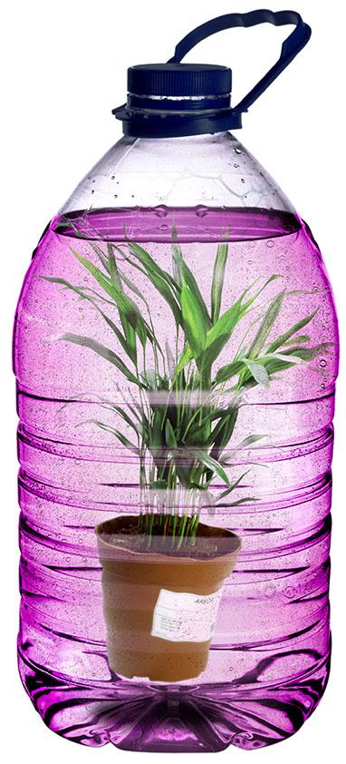 Plantes interieur preserve dans un fluide